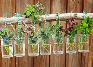 Jak leczyć się ziołami?