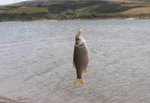 ryba słodkowodna